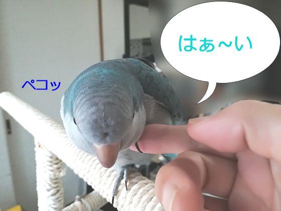 f:id:okinan181025:20190912212241j:plain