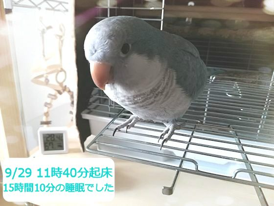 f:id:okinan181025:20190930220827j:plain