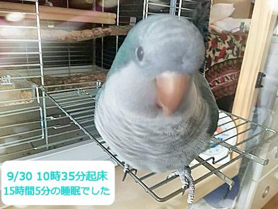f:id:okinan181025:20190930220841j:plain