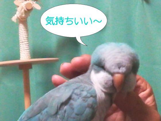 f:id:okinan181025:20191101234003j:plain