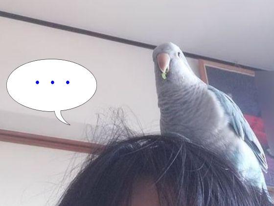 f:id:okinan181025:20191106230935j:plain