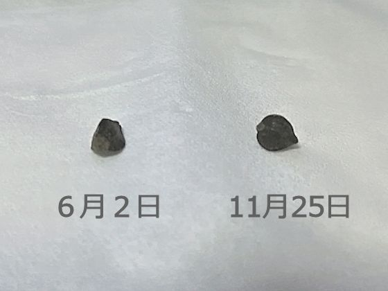 f:id:okinan181025:20191126230152j:plain