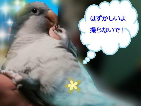 f:id:okinan181025:20200113232619j:plain