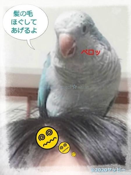 f:id:okinan181025:20200629233337j:plain