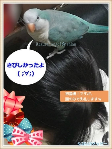 f:id:okinan181025:20201008013025j:plain
