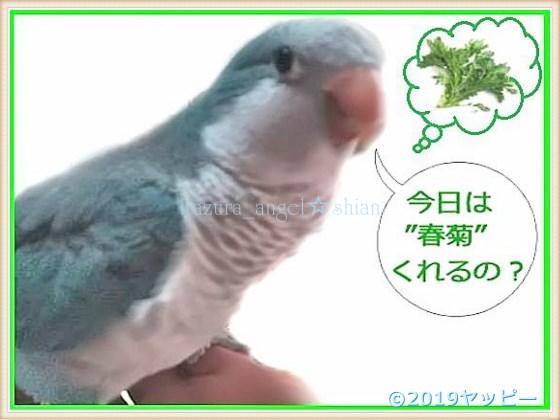 f:id:okinan181025:20201008014309j:plain