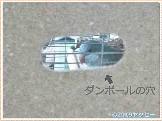 f:id:okinan181025:20201008020007j:plain