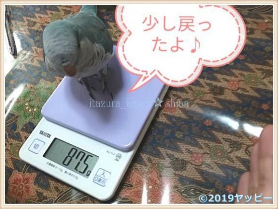 f:id:okinan181025:20201010225155j:plain