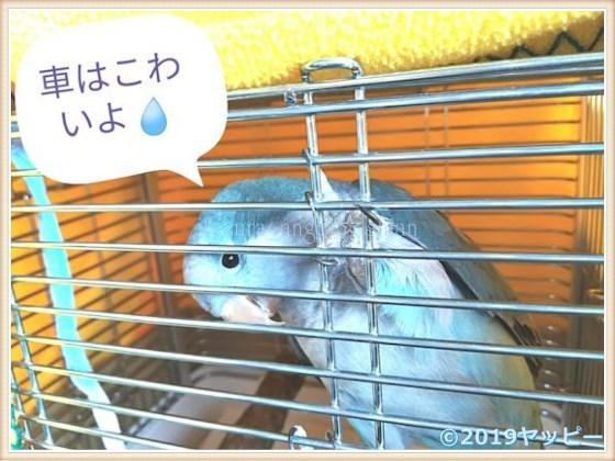f:id:okinan181025:20201014030835j:plain