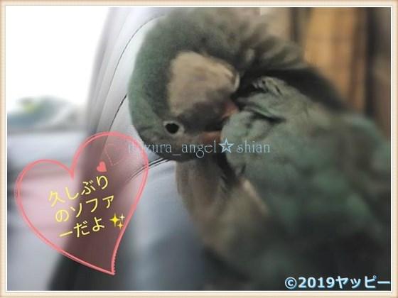 f:id:okinan181025:20201014030839j:plain