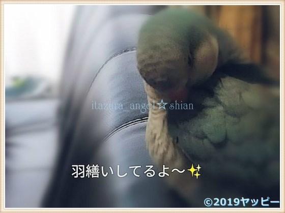 f:id:okinan181025:20201014030843j:plain