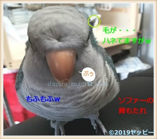 f:id:okinan181025:20201016003535j:plain