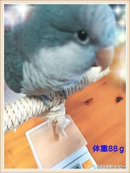 f:id:okinan181025:20201018015946j:plain