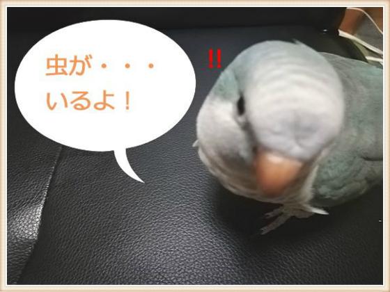 f:id:okinan181025:20201021023336j:plain
