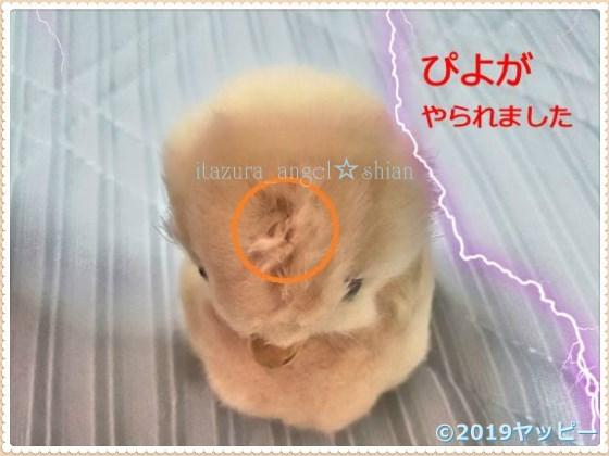 f:id:okinan181025:20201022003214j:plain
