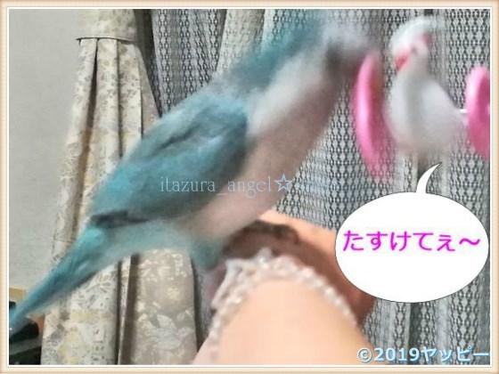 f:id:okinan181025:20201022003229j:plain