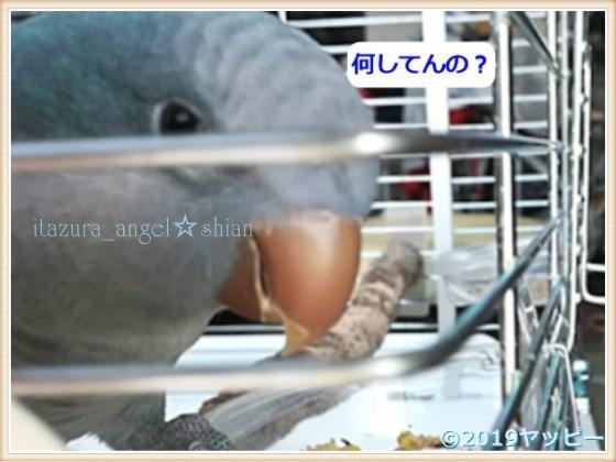f:id:okinan181025:20201022021329j:plain