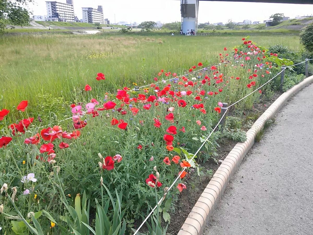 f:id:okinawa-rail:20200530220012j:plain