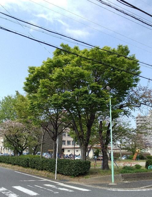 f:id:okinawa-rail:20210406221300j:image