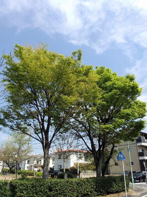 f:id:okinawa-rail:20210406221409j:image