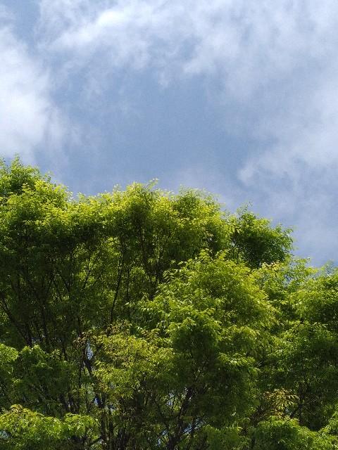 f:id:okinawa-rail:20210408214751j:image