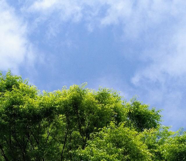 f:id:okinawa-rail:20210408214928j:image