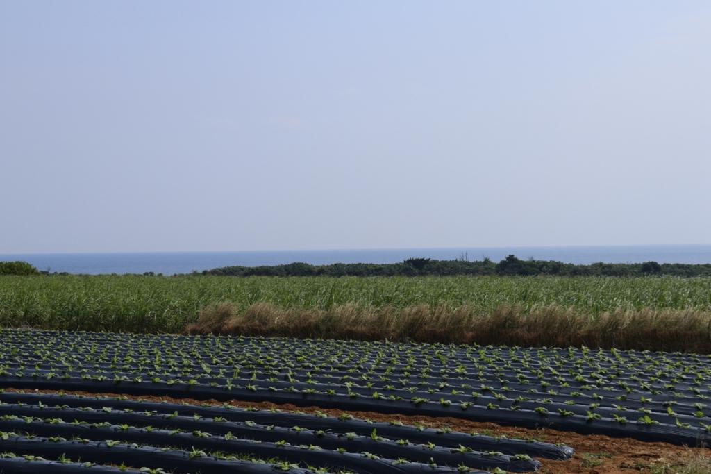 f:id:okinawa_peninsula:20170406214620j:plain