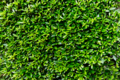 [SEL30F3.5Macro][Art]Green Wall