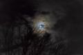[SEL35F1.8OSS][Art] Full moon on X'mas