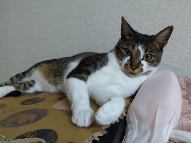f:id:okirakuya-kimono:20210509104321j:image