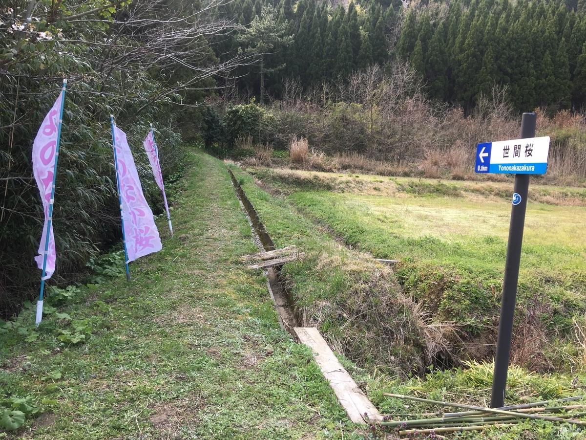 世間桜への道の入り口。急なので運動靴は必須です。