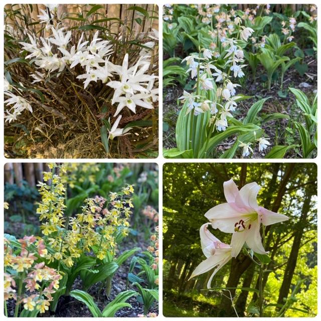 園内は花がいっぱいです