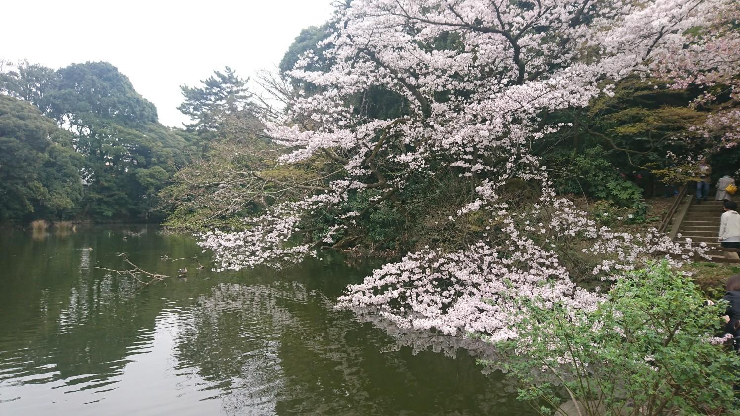 f:id:okkei:20190402195123j:image