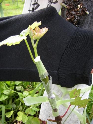 f:id:okkuu-daaman:20080607133642j:image:h150,right