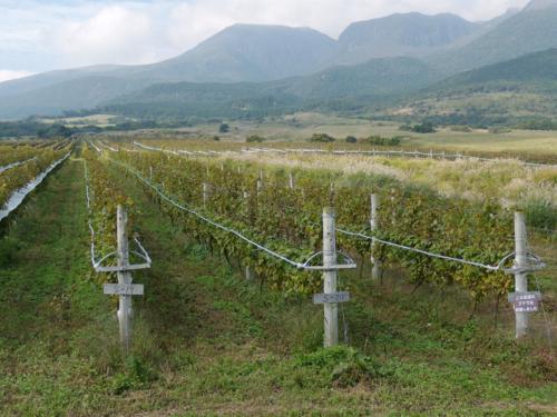 f:id:okkuu-daaman:20081011134900j:image:w120:left