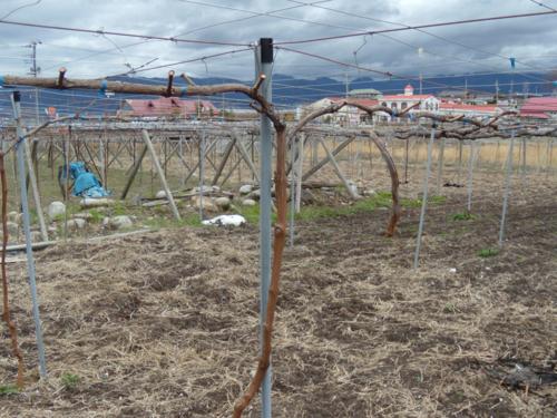 f:id:okkuu-daaman:20090322150858j:image:w120:left