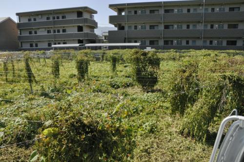f:id:okkuu-daaman:20090910084149j:image:w150:right