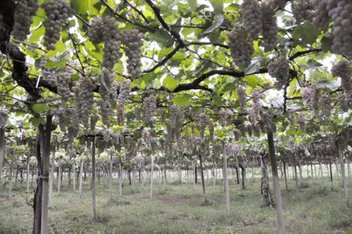f:id:okkuu-daaman:20100910055052j:image:w150:left