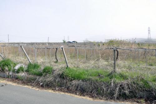 f:id:okkuu-daaman:20110502081225j:image:w150:left