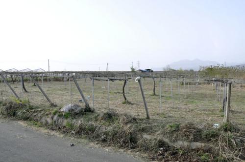 f:id:okkuu-daaman:20110502172727j:image:w150