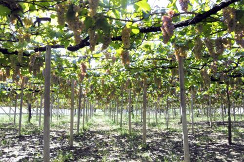 f:id:okkuu-daaman:20110922103633j:image:w170:left