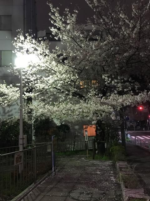 f:id:okomaru-arisuke:20170409110304j:plain