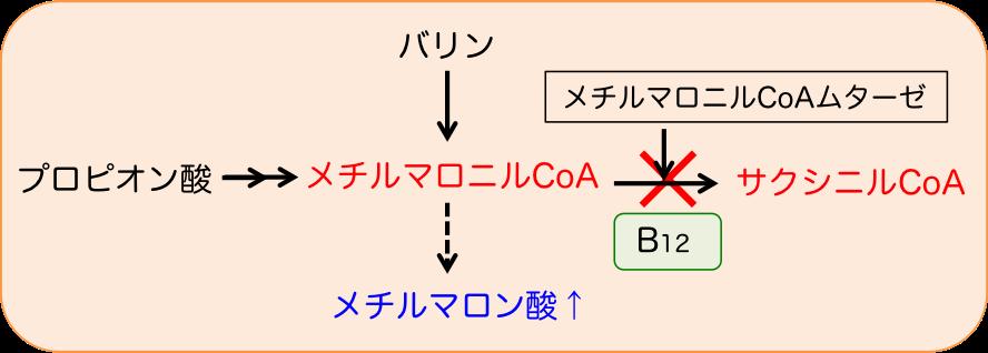 メチルマロニルCoAムターゼの補酵素