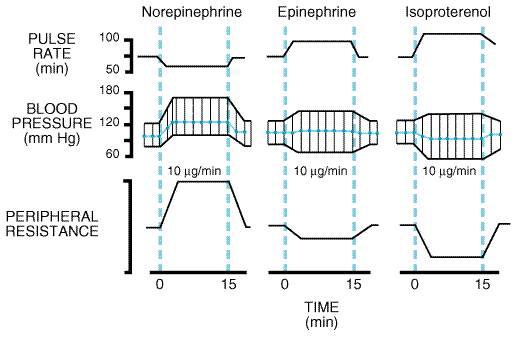 カテコラミン静注による血圧・心拍数の変動