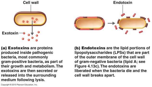 exotoxinとendotoxin