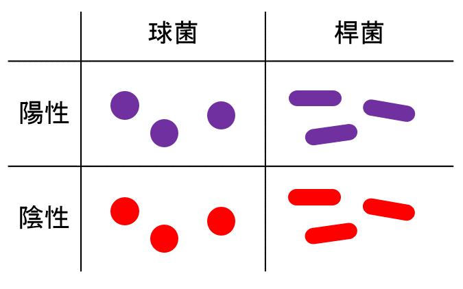 グラム染色の表
