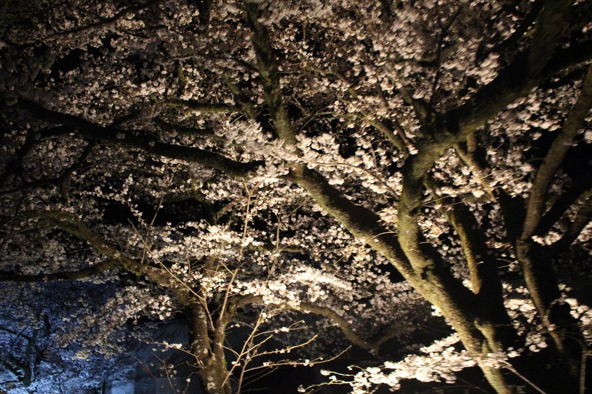f:id:okuchichibu551:20190427191604j:plain
