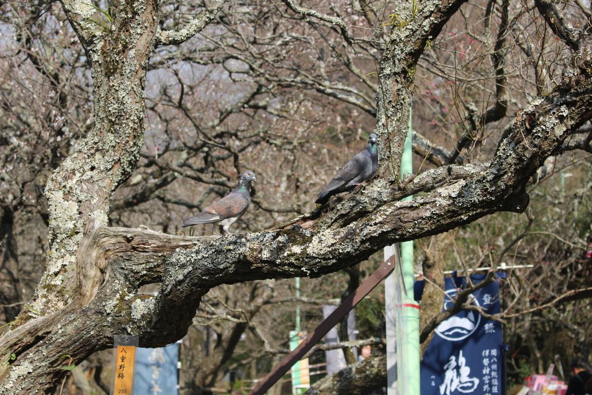 f:id:okuchichibu551:20200222093412j:plain