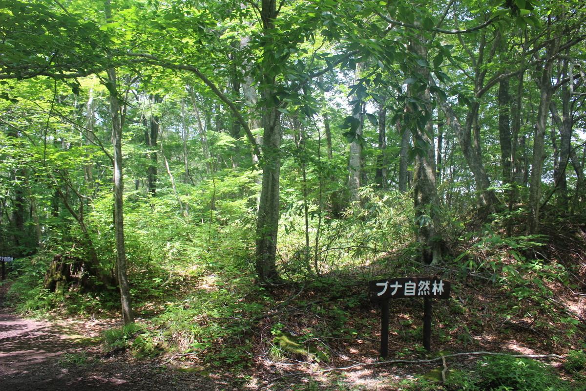 f:id:okuchichibu551:20200926131537j:plain