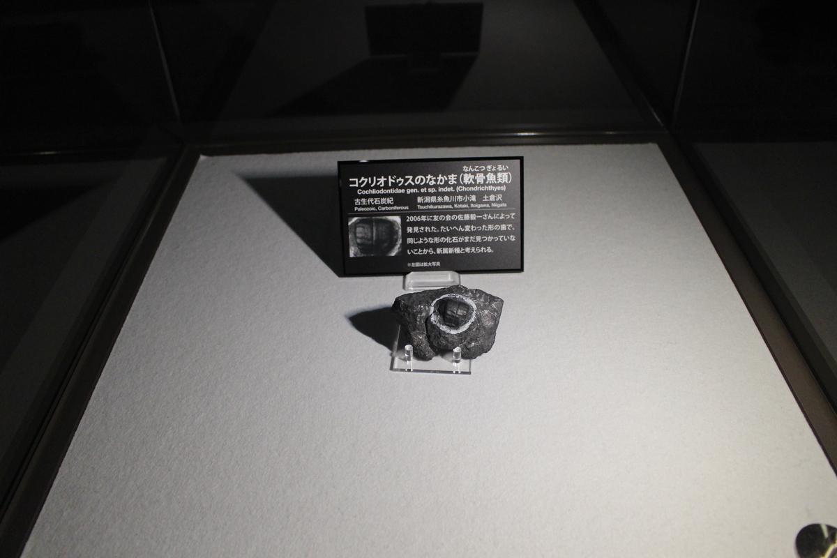 f:id:okuchichibu551:20201213151451j:plain